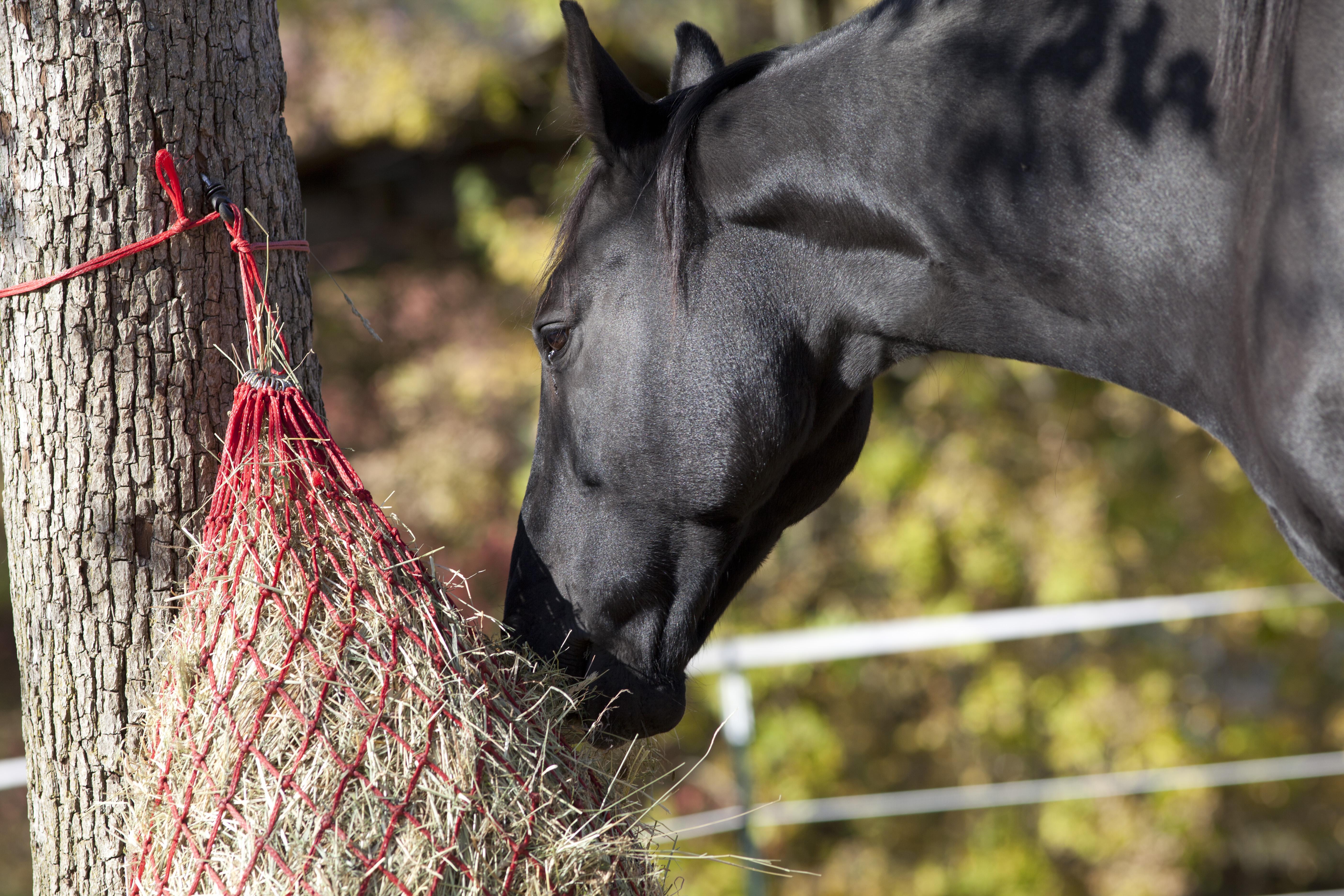 Hay Net for feeding hay