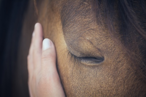 Grieving Loss of Horse