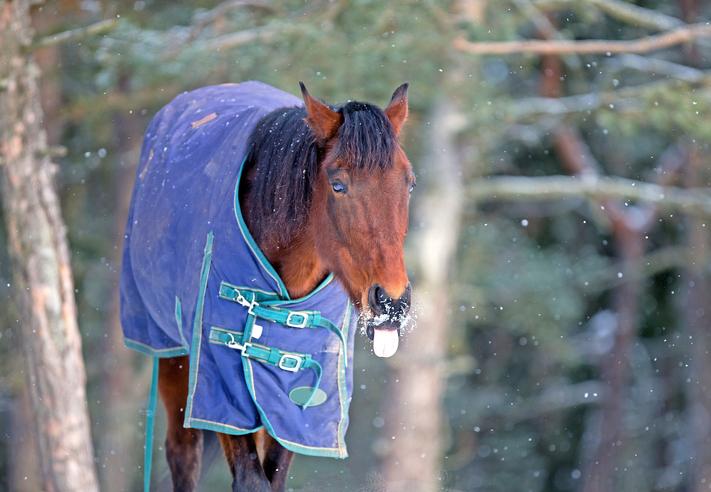 Horse Winter Prep