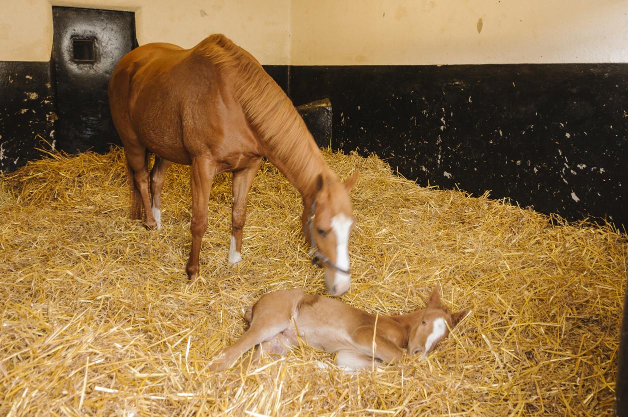 Straw Horse Bedding